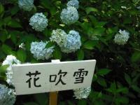 2017-07-08一関市舞川みちのくあじさい園097