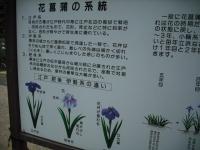 2017-06-24平泉・毛越寺あやめ祭り132