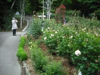2017-06-11花巻温泉のバラ園175