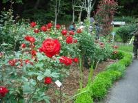 2017-06-11花巻温泉のバラ園179