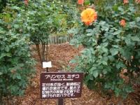 2017-06-11花巻温泉のバラ園186