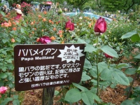 2017-06-11花巻温泉のバラ園190