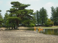 2017-06-24平泉・毛越寺あやめ祭り152