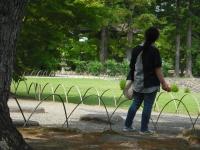 2017-06-24平泉・毛越寺あやめ祭り163