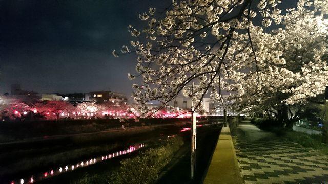 20170408sakura.jpg