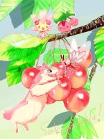 0529 sakurambo-