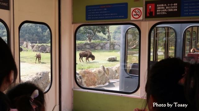 バスの窓からの眺め