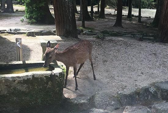 170521_bambi.jpg