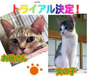 banner_qu_try.jpg