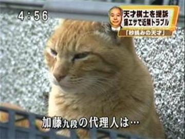 katohifumi_nekosaiban.jpg