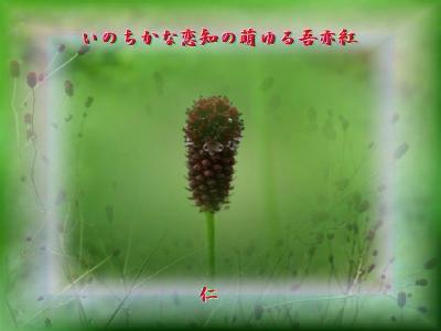 『 いのちかな恋知の萌ゆる吾亦紅 』恋知575交心qq1303