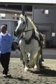 170908 ばん馬イベント ばん馬デモンストレーション走行-01