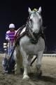 170908 ばん馬イベント ばん馬デモンストレーション走行-03
