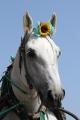 170909 ばん馬イベント ばん馬と綱引き対決-02