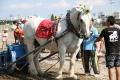 170909 ばん馬イベント ばん馬と綱引き対決-07