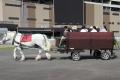 170909 ばん馬イベント ばん馬馬車-02