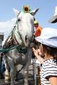 170909 ばん馬イベント ばん馬とのふれ合い-02