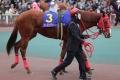 171231 東京2歳優駿牝馬-02