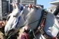 180102 ばん馬とのふれあい-01
