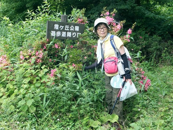 サツキが咲いている霞ケ丘公園
