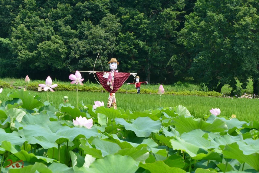 20170717キツネノカミソリ_稲荷山09