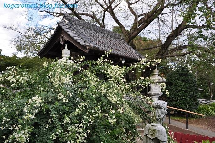 満福寺の秋の花2