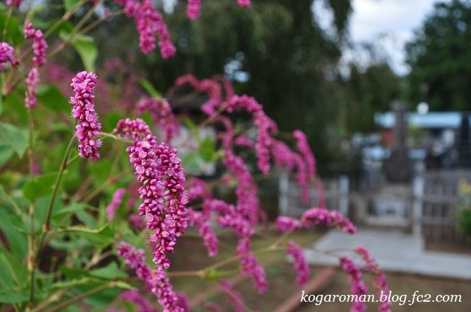 満福寺の秋の花3
