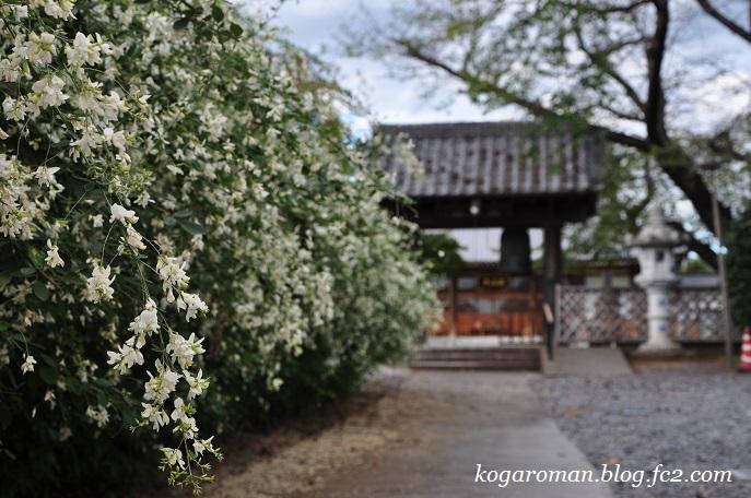 満福寺の秋の花