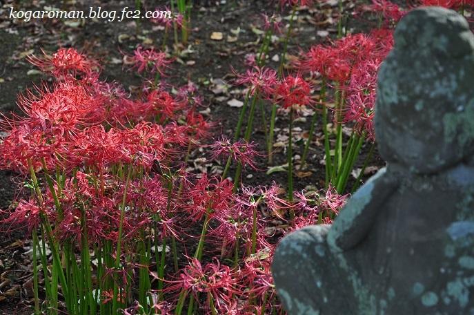 満福寺の秋の花4