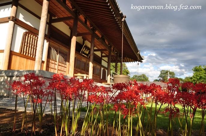 満福寺の秋の花5