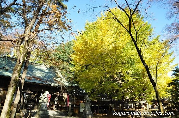 野木神社の黄葉