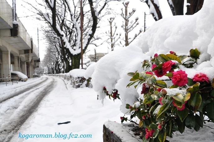 雪景色の四季の径