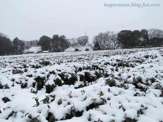 古河総合公園の雪