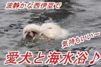 umimiro1_201705180026380fc.jpg
