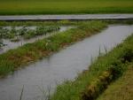 2017年7月22日の大雨(水門)