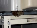 室外機の下のハチの巣