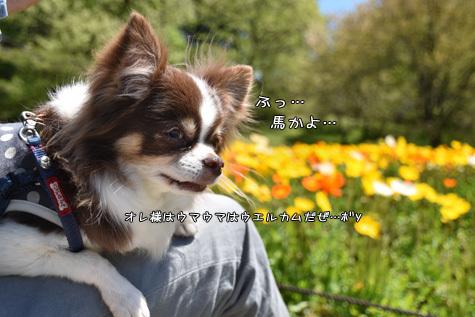DSC06340511.jpg