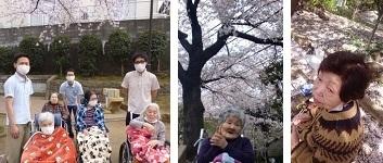 1704桜を (3)