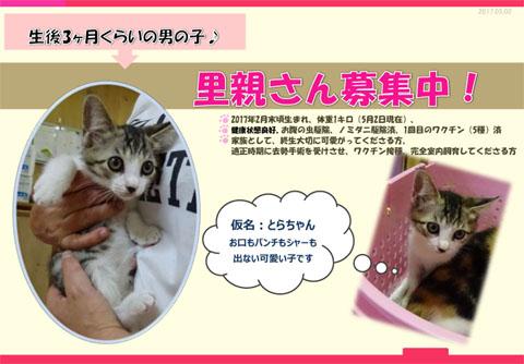 豊川さん募集仔猫チラシ20170502