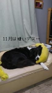 2011/11/08
