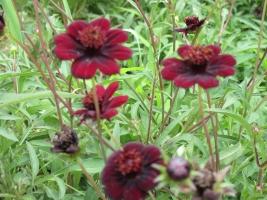 高沢ファームの紅色花