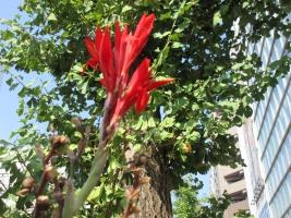 ボートピア横浜前の赤い花