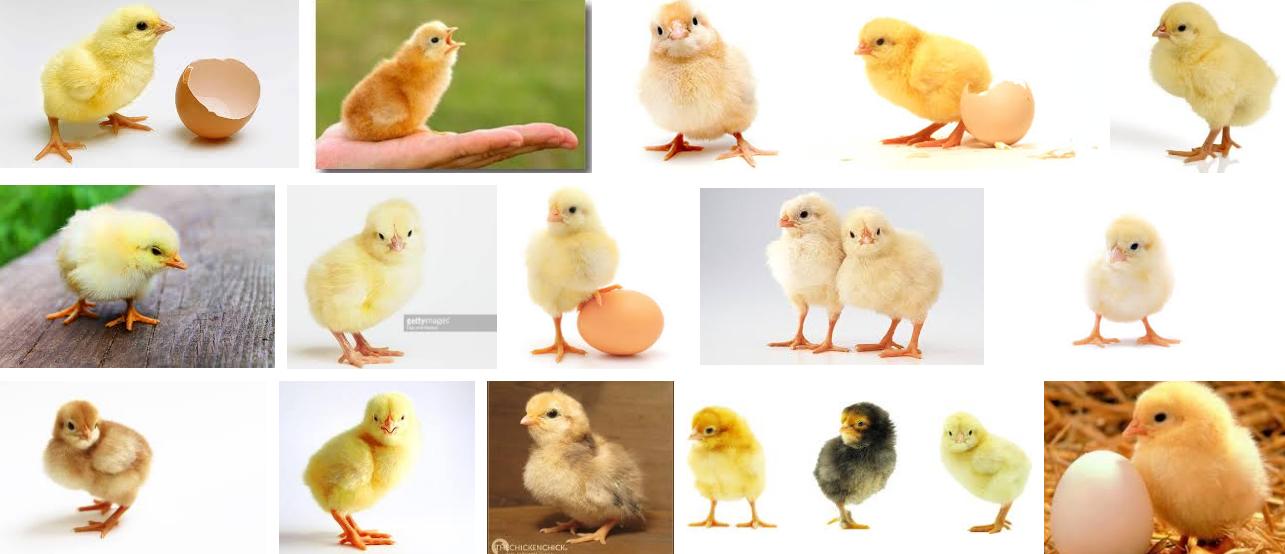 chick Google 検索
