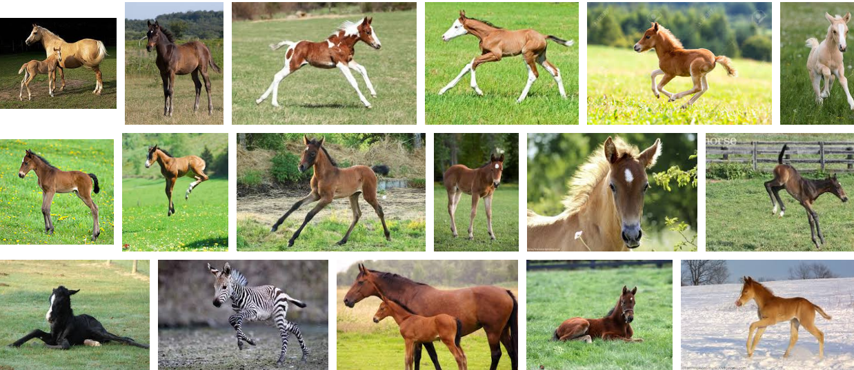 foal Google 検索