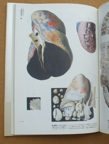 荒俣宏 解剖の美学 10