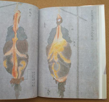 荒俣宏 解剖の美学 12