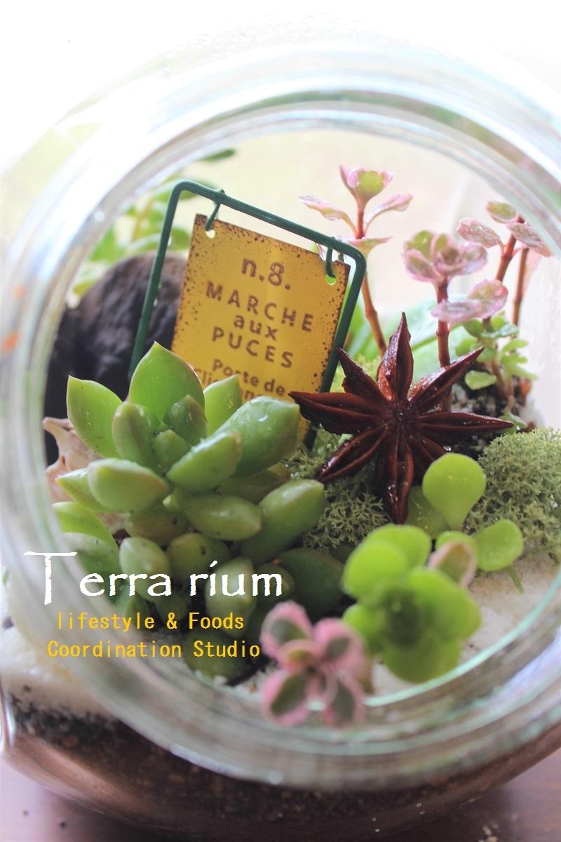 terrarium PC