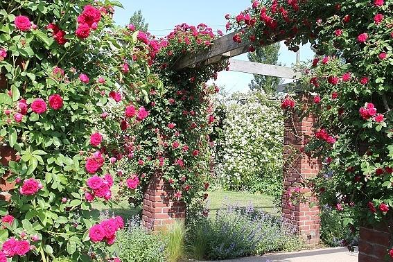 rose1g.jpg