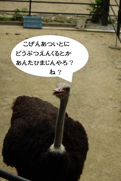 福岡市動物園のダチョウ 性別不明