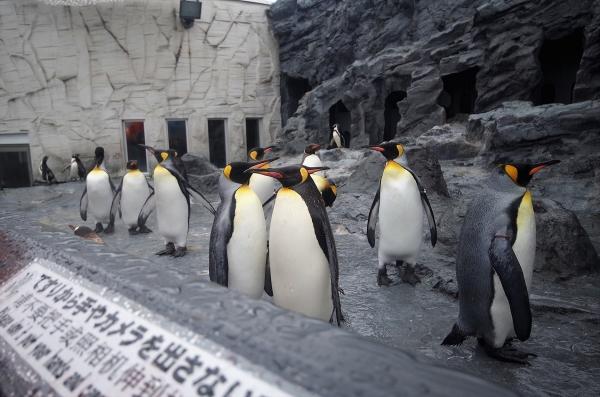 旭山動物園 旭川市 北海道遠征 キングペンギン